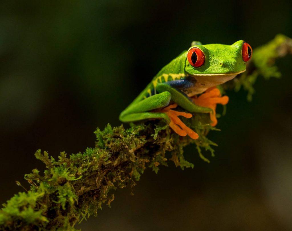 Parque Nacional Tortuguero Cosat Rica