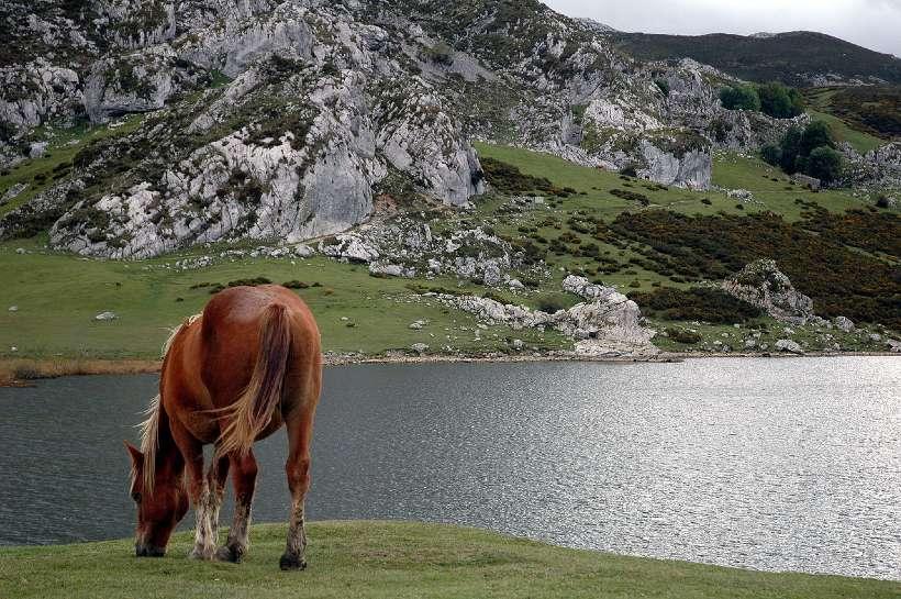 lagos de Enol