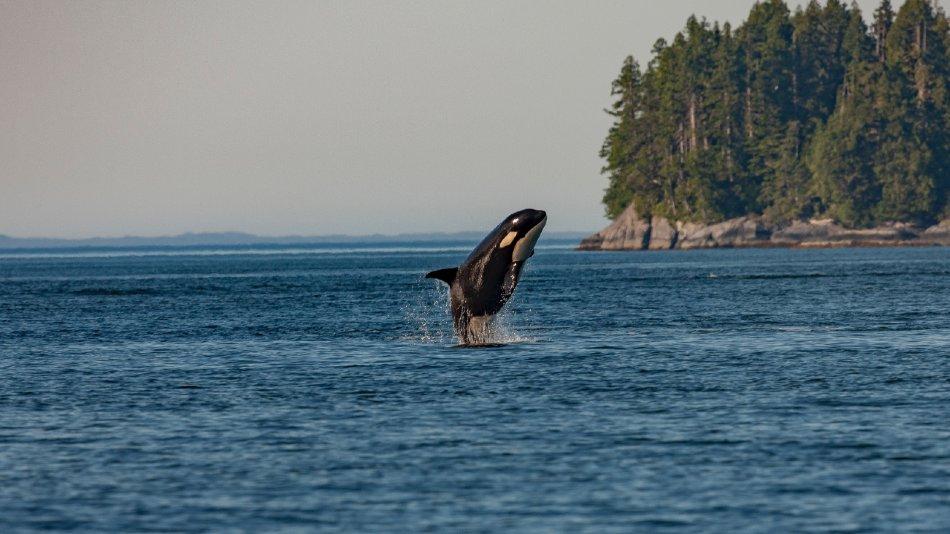 ver ballenas en Canadá
