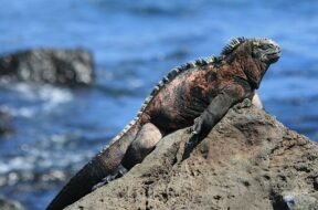 Requisitos Viajar Islas Galápagos